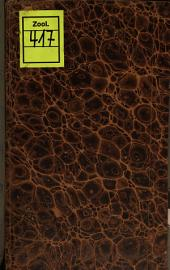 De stella marina echinata quindecim radiis distincta