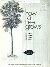 How a tree grows: leaves, crown, trunk, roots