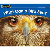 What Can a Bird See?
