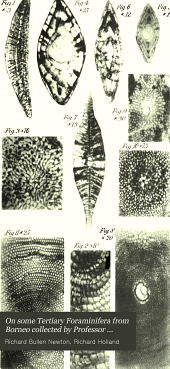 On Some Tertiary Foraminifera from Borneo Collected by Professor Molengraaff and the Late Mr. A.H. Everett, and Their Comparison with Similar Forms from Sumatra