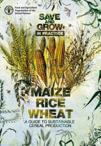 Save and Grow in practice  maize  rice  wheat