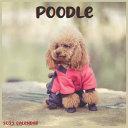 Poodle Calendar 2022