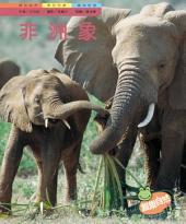 非洲象: 親親自然121