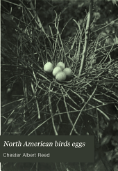 North American Birds Eggs