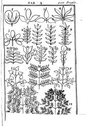 Antonii Goüan ... Hortus regius monspeliensis: sistens plantas tum indigenas tum exoticas no. MM. CC. ad genera relatas ... secundum sexualem methodum digestas ...