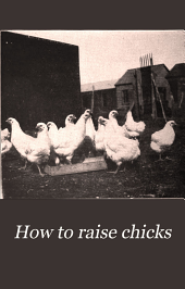 How to Raise Chicks