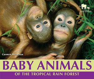 Baby Animals of the Tropical Rain Forest PDF