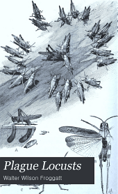 Plague Locusts