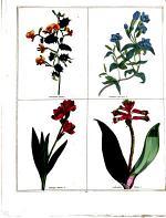 The Magazine of Botany & Gardening, British and Foreign ...