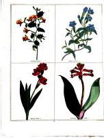 The Magazine of Botany   Gardening  British and Foreign     PDF