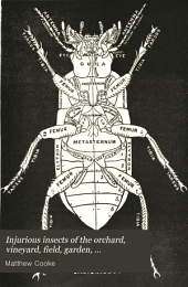 Injurious Insects of the Orchard, Vineyard, Field, Garden, Conservatory, Household, Storehouse, Domestic Animals, Etc: With Remedies for Their Extermination