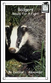 Badgers: Ready For A Fight: Educational Version