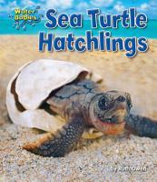 Sea Turtle Hatchlings PDF