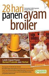 28 Hari Panen Ayam Broiler