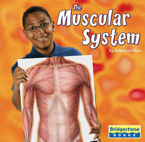 The Muscular System PDF