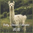Download Baby Llamas Calendar 2020 Book