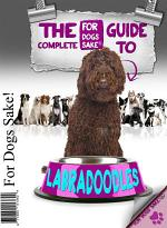 The Complete Guide to Labradoodle
