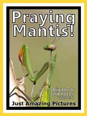 Just Praying Mantis! vol. 1: Big Book of Praying Mantis Photographs & Pictures
