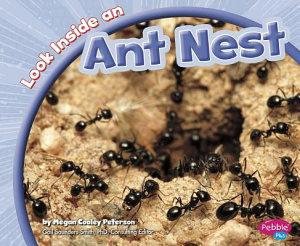 Look Inside an Ant Nest