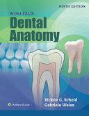 Woelfels Dental Anatomy