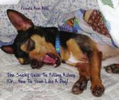 The Snicky Guide To Falling Asleep: (Or... How To Yawn Like A Dog)