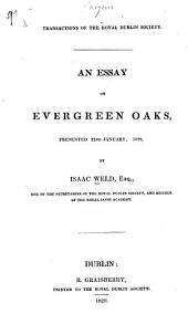 An Essay on Evergreen Oaks