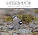 Shorebirds in Action PDF