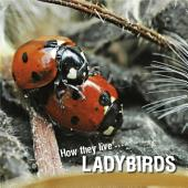How they live... Ladybirds: Learn All There Is to Know About These Animals!