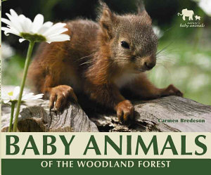 Baby Animals of the Woodland Forest PDF