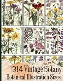 1914 Vintage Botany Botanical Illustration Sizes