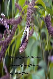 Chicago Botanic Gardens: Dowload Free Pictures