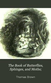 The Book of Butterflies, Sphinges, and Moths;: Illustrated by One Hundred and Forty-four Engravings, Coloured After Nature, Volume 3