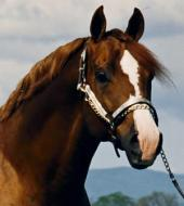 The Business of Horses: Creating A Successful Horse Business, Second Edition
