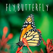 Fly, Butterfly