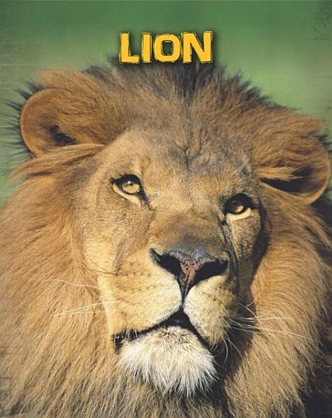 Download Lions Book
