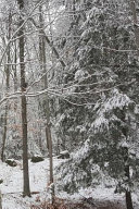Winter Photo Journal Snow Covered Evergreen Branches