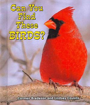 Can You Find These Birds  PDF