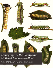 Monograph of the Bombycine Moths of America North of Mexico: Family ceratocampidae, sub. family ceratocampinae