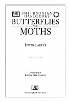 Butterflies and Moths PDF