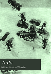 Ants: Their Structure, Development and Behavior