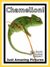 Just Chamelions! vol. 1: Big Book of Photographs & Chamelion Pictures