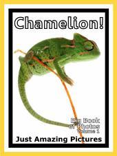 Just Chamelions! vol. 1: Big Book of Photographs & Chamelion Pictures