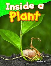 Inside a Plant