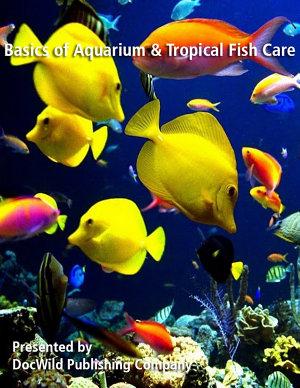 The Basics of Aquarium and Tropical Fish Care