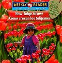 C  mo Crecen Los Tulipanes PDF