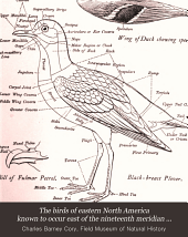 The Birds of Eastern North America Known to Occur East of the Nineteenth Meridian