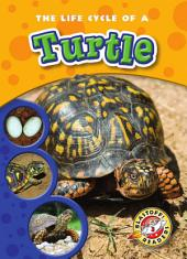 Life Cycle of a Turtle, The