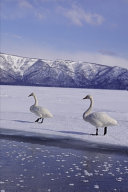 2020 Weekly Planner Winter Theme Frozen Geese 134 Pages