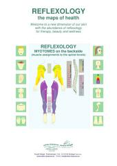 REFLEXOLOGY - MYOTOMES on the backside: REFLEXOLOGY - the maps of health