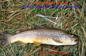 Duck Creek - Montana, USA: Rocky Mountain Fishing Journals